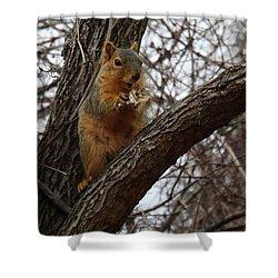 Fox Squirrel 1 Shower Curtain by Sara  Raber