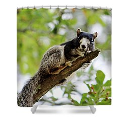 Fox Squirrel Shower Curtain by Cynthia Guinn