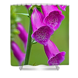 Foxglove Digitalis Purpurea Shower Curtain