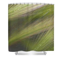 Foxtail Fans Shower Curtain