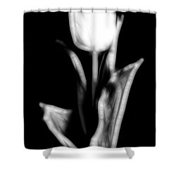 Fractal Tulip Shower Curtain