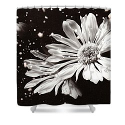 Fractured Daisy Shower Curtain