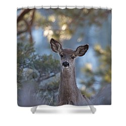Framed Deer Head And Shoulders Shower Curtain by Duncan Selby