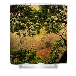 Framing Tree Branches Shower Curtain by Jenny Rainbow