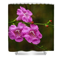 Free Shower Curtain by Julie Andel