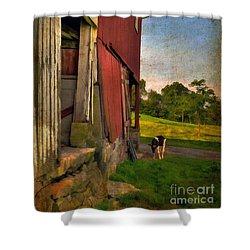 Free Range Shower Curtain by Lois Bryan
