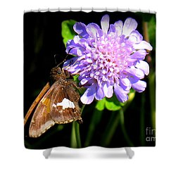 Silver Spotted Skipper Shower Curtain by Patti Whitten