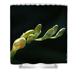Freesia Fingers Shower Curtain by Joy Watson