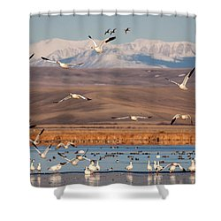 Shower Curtain featuring the photograph Freeze Out Lake Morning by Jack Bell