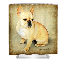 Shower Curtain featuring the photograph French Bulldog Antique by Barbara Chichester