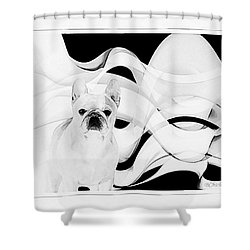 Shower Curtain featuring the painting French Bulldog by Barbara Chichester