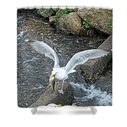 Fresh Catch Of The Day Shower Curtain by Barbara McDevitt