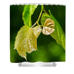 Fresh - Featured 3 Shower Curtain by Alexander Senin