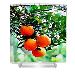 Fresh Orange On Plant Shower Curtain by Lanjee Chee