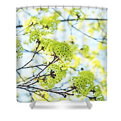 Shower Curtain featuring the photograph Fresh Spring Green Buds by Brooke T Ryan