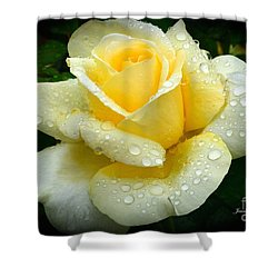 Fresh Sunshine Daydream Rose Shower Curtain