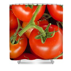 Shower Curtain featuring the photograph Fresh Whole Tomatos On Vine by David Millenheft