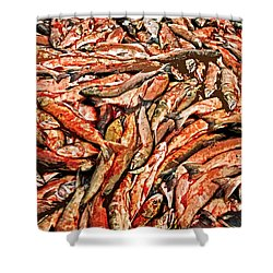 Freshly Catched Salmons At The Nenana River - Ak Shower Curtain by Juergen Weiss