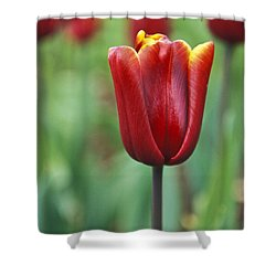 Freshness  Shower Curtain by Lana Enderle