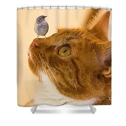 Friend Or Foe Shower Curtain by Brian Roscorla