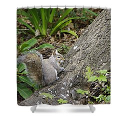 Shower Curtain featuring the photograph Friendly Squirrel by Marilyn Wilson