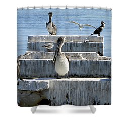 Pelican Friends Shower Curtain