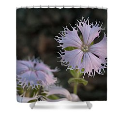 Shower Curtain featuring the photograph Fringed Catchfly by Paul Rebmann