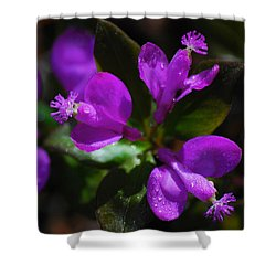 Fringed Polygala Shower Curtain by Christina Rollo