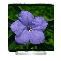 Shower Curtain featuring the photograph Wild Fringeleaf Ruellia by William Tanneberger