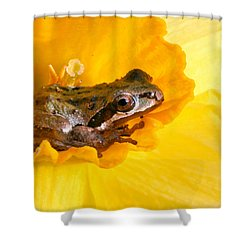 Frog And Daffodil Shower Curtain by Jean Noren