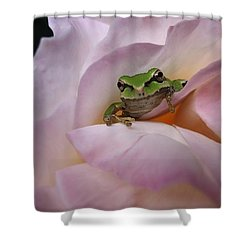Shower Curtain featuring the photograph Frog And Rose Photo 1 by Cheryl Hoyle