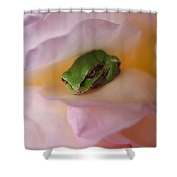 Shower Curtain featuring the photograph Frog And Rose Photo 2 by Cheryl Hoyle