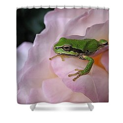 Shower Curtain featuring the photograph Frog And Rose Photo 3 by Cheryl Hoyle