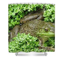 Frog Shower Curtain by DejaVu Designs
