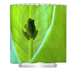 Shower Curtain featuring the photograph Frog In Blankie by Faith Williams