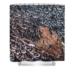 Shower Curtain featuring the photograph Frog On A Web by Rob Sellers