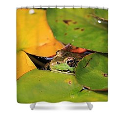 Frog Pond 3 Shower Curtain