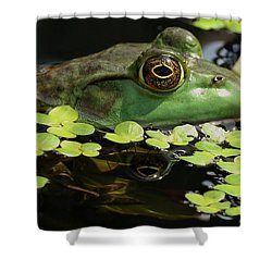 Frog Reflection Shower Curtain by Barbara S Nickerson