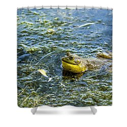 Frog Song Shower Curtain