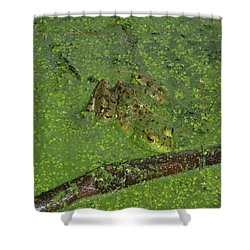 Shower Curtain featuring the photograph Froggie by Robert Nickologianis