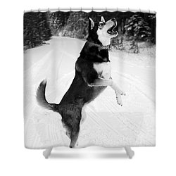 Frolicking In The Snow - Black And White Shower Curtain by Carol Groenen
