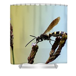 From Here To There Shower Curtain by Kim Pate