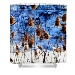 Shower Curtain featuring the photograph Fronds In Winter by Eleanor Abramson