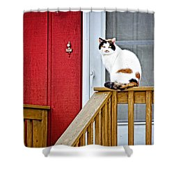 Front Porch Cat Shower Curtain