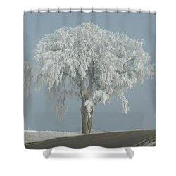 Frost Covered Lone Tree Shower Curtain