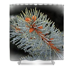 Frost Drops Shower Curtain by Bob Hislop
