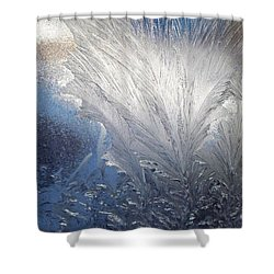 Frost Ferns Shower Curtain by Joy Nichols