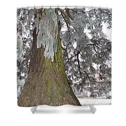 Shower Curtain featuring the photograph Frost On The Leaves by Felicia Tica