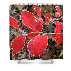 Frosted Blueberry Leaves Shower Curtain