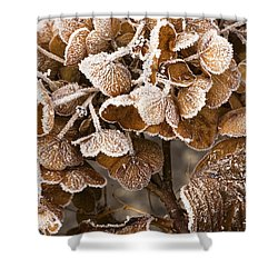 Frosted Hydrangea Shower Curtain by Anne Gilbert